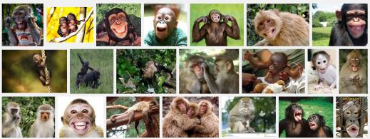 Bilde: Googlesøk på glade aper